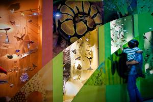 Natural science displays at Leeds City Museum