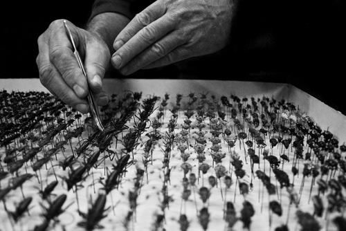 Entomology curation