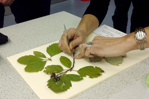 Herbarium curation