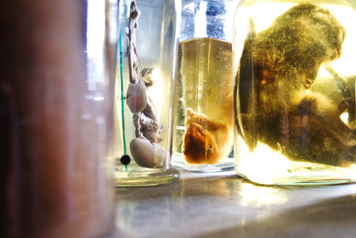fluid specimens